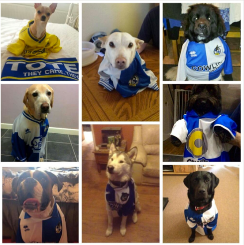 Dogs. In Bristol Rovers shirts. Quite literally